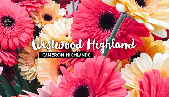 Westwood Highlands Backpacker, Cameron Highlands