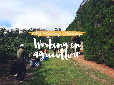 What I've Learnt From Working with a New Zealand Working Holiday Visa
